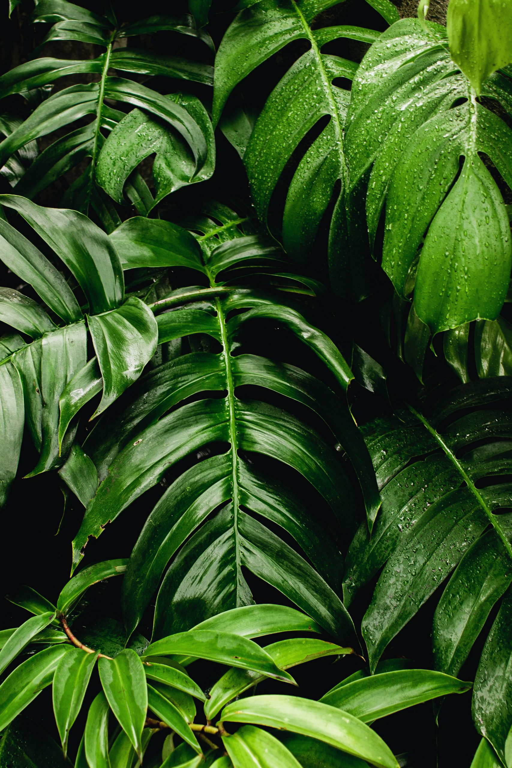 How to boost organic traffic with evergreen content image